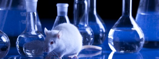animal-testing-wide.jpg